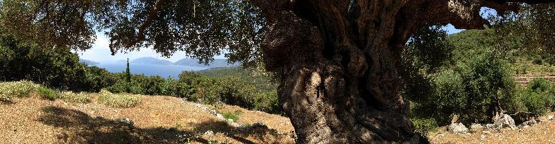 bekroonde spirituele roman de vloek van de tahiera