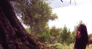 elfenvolk bomen